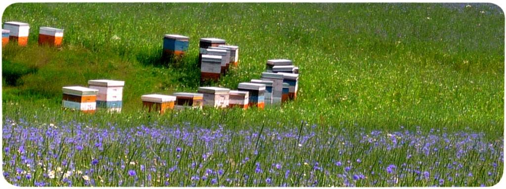 Bienenkasten